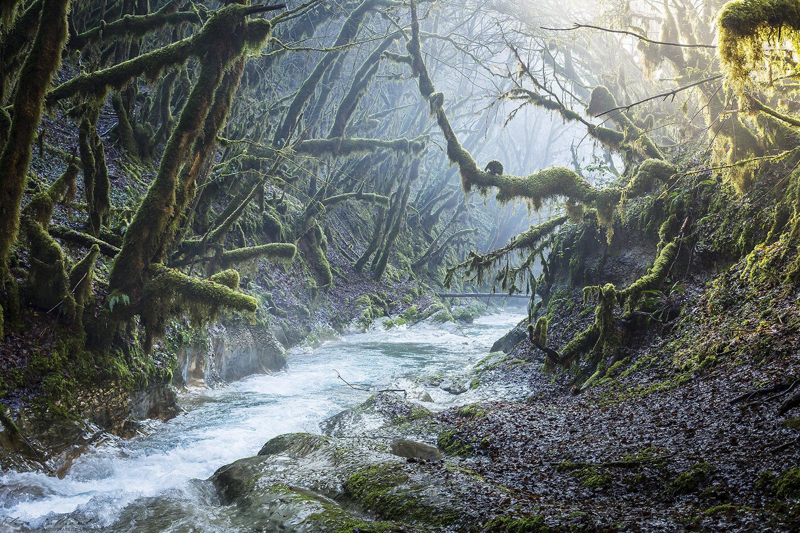 elise-julliard-photographe-rhone-alpes-ain-bugey-foret-mousse-riviere-photo