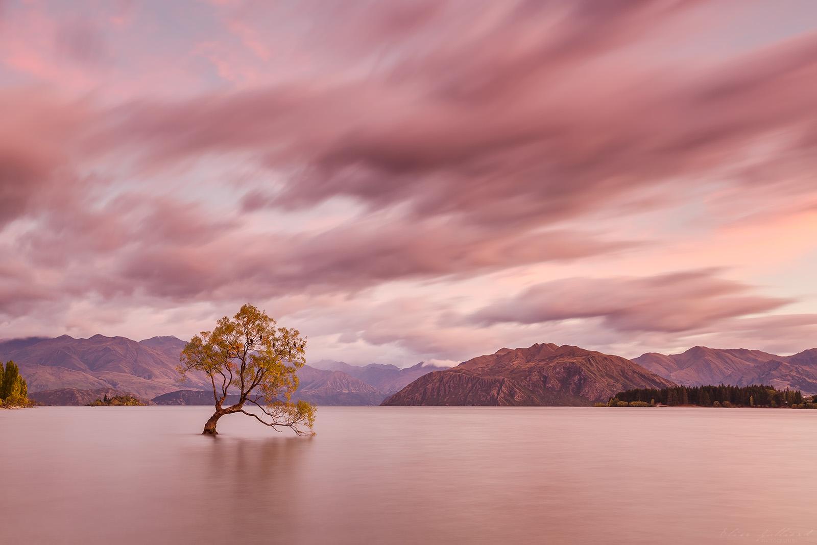 wanaka-lake-tree-new-zealand-nouvelle-zelande-otago-south-island-mount-aspiring-photographe-paysage-landscape-autumn-mountain-photographer-elise-julliard