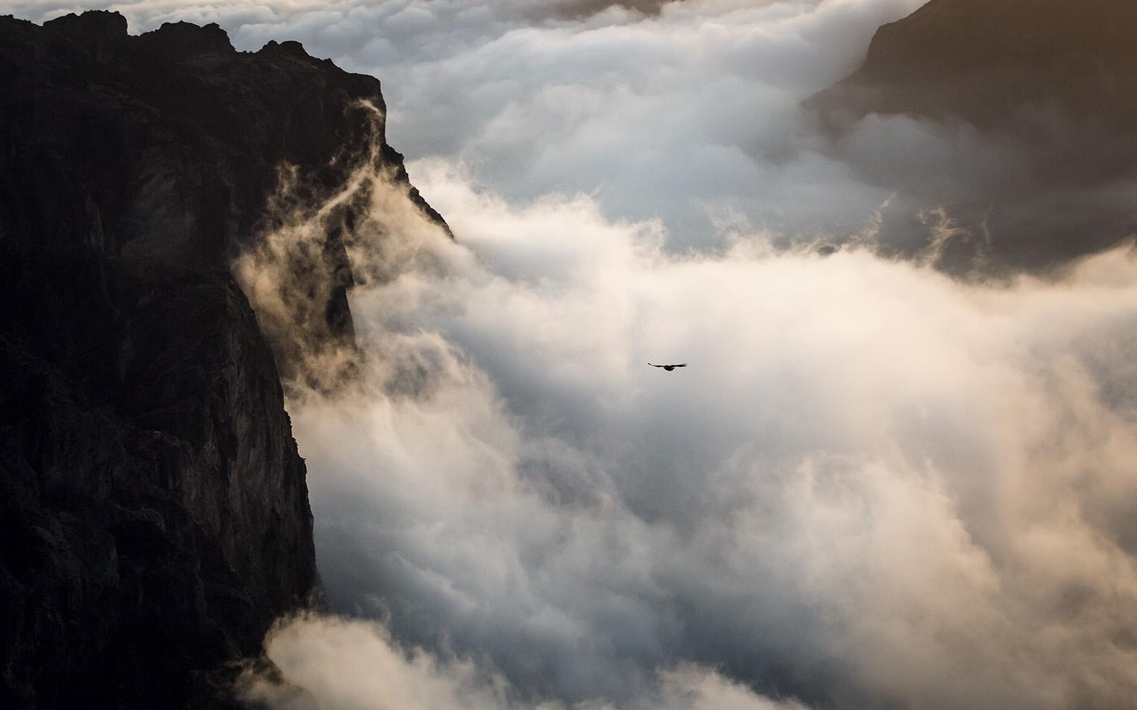 madere-madeira-island-portugal-voyage-travel-elise-julliard-photographe-photographer-pico-ruivo-arieiro-montagne-mountain-funchal-paysage-landscape-oiseau-bird