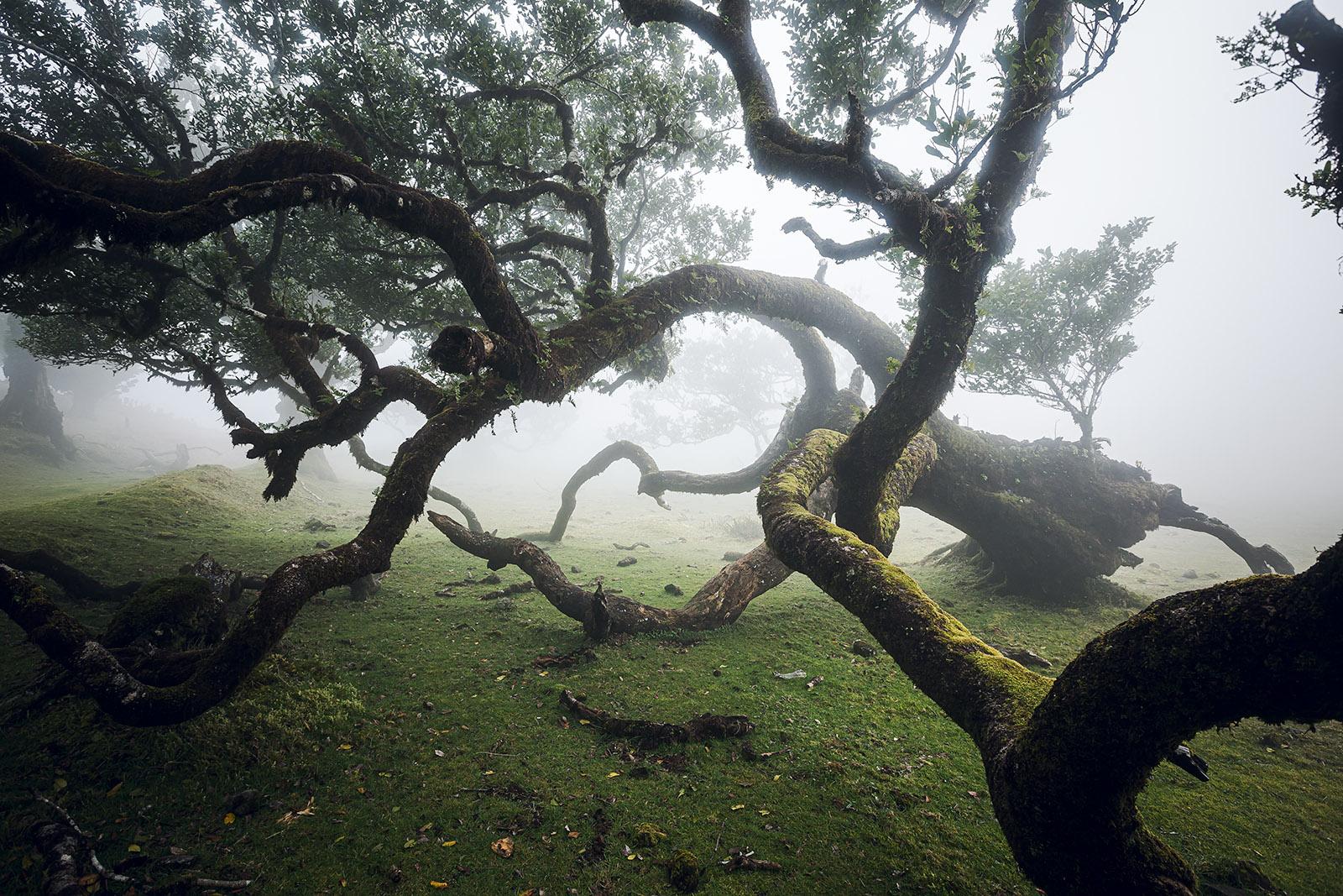 madere-madeira-island-portugal-voyage-travel-elise-julliard-photographe-photographer-serra-do-fanal-foret-primaire-laurifere-lauriers-laurisilva-forest-brouillard-fog